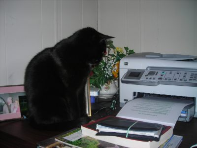 cat watching printer